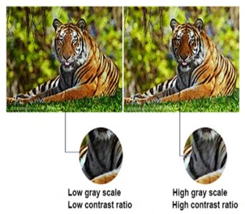 grayscale images showing